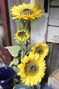 Sunflower Sisters Vintage 33