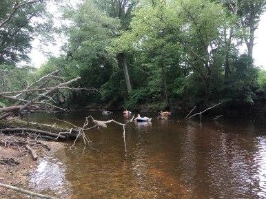 Little River Tubing