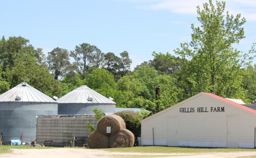 A Day at the Farm: Gillis HillFarm